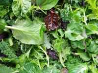 Mixed-salad-leaves